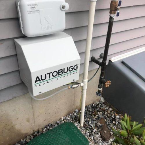 Autobugg1